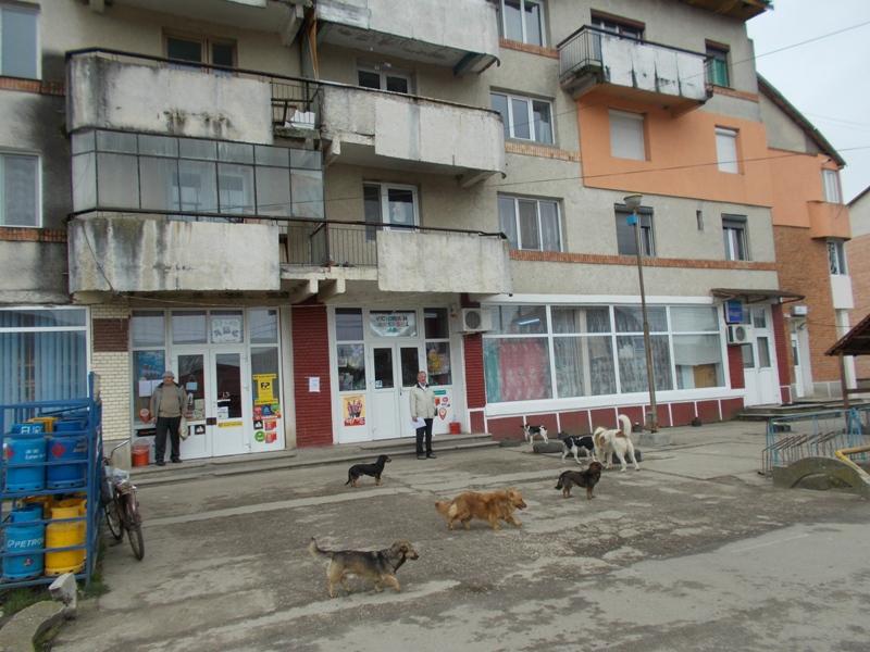 Strassenhunde vor dem lebensmittelladen